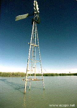 Windmill in water shows the ephemeral nature of Lake Cowal, the wet and dry phases of which are both of ecological importance to the functioning of its ecosystem, and to agriculture and fisheries.